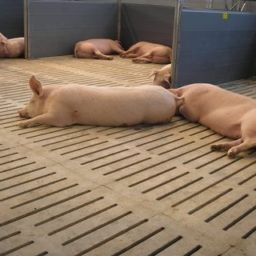 Бетонна щілинна підлога для свиноферм і свинокомплексів - висока якість за доступною ціною