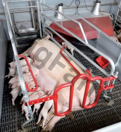 Станок (клітка) для опоросу свиноматки